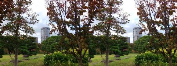藤田邸跡公園⑥(平行法)