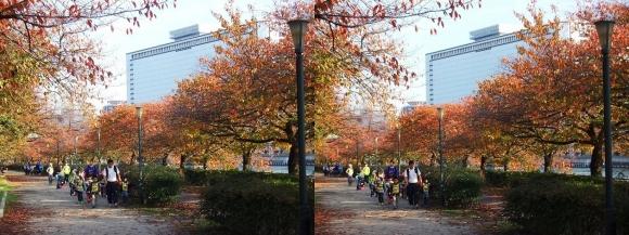 南天満公園からの大阪マーチャンダイズマートビル(交差法)