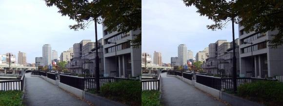 堂島川沿い遊歩道からの眺望③(交差法)