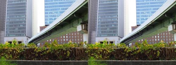 堂島川沿い遊歩道からの眺望①(平行法)