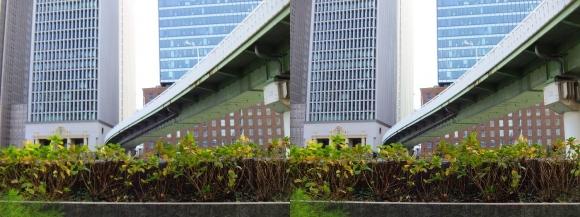 堂島川沿い遊歩道からの眺望①(交差法)