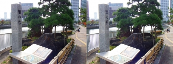 田蓑橋北詰「蛸の松」①(平行法)