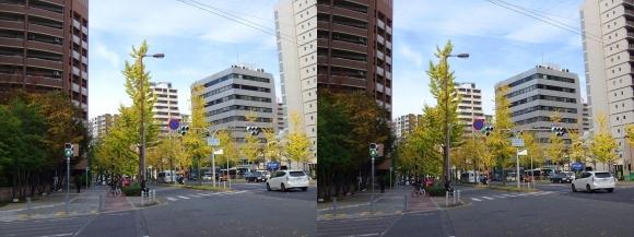 なにわ筋 京町堀(交差法)