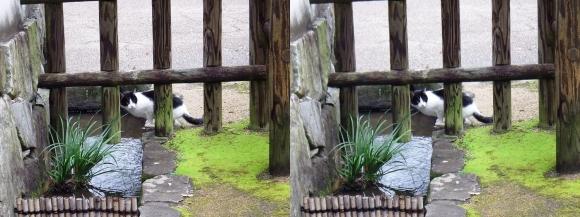 姫路城西屋敷公園 好古園 玄関~屋敷門への通路の猫(平行法)