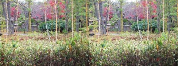 姫路城西屋敷公園 好古園 築山池泉の庭~竹の庭⑦(平行法)