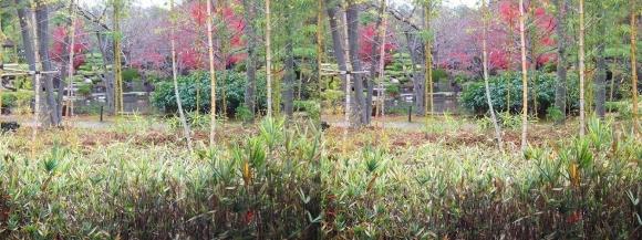 姫路城西屋敷公園 好古園 築山池泉の庭~竹の庭⑦(交差法)