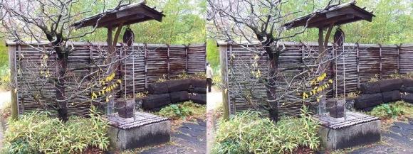 姫路城西屋敷公園 好古園 築山池泉の庭~竹の庭⑥(平行法)