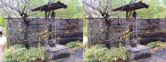 姫路城西屋敷公園 好古園 築山池泉の庭~竹の庭⑥(交差法)