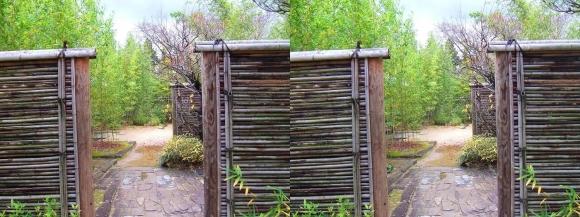 姫路城西屋敷公園 好古園 築山池泉の庭~竹の庭⑤(平行法)