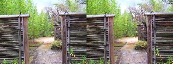 姫路城西屋敷公園 好古園 築山池泉の庭~竹の庭⑤(交差法)