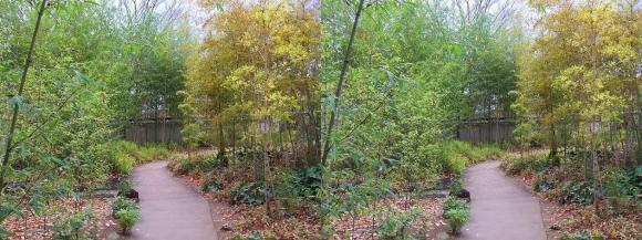 姫路城西屋敷公園 好古園 築山池泉の庭~竹の庭④(平行法)