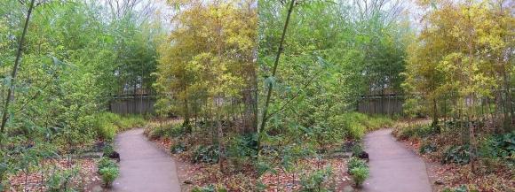 姫路城西屋敷公園 好古園 築山池泉の庭~竹の庭④(交差法)