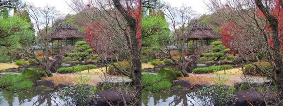 姫路城西屋敷公園 好古園 築山池泉の庭~竹の庭③(交差法)