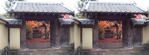 姫路城西屋敷公園 好古園 流れの平庭~夏木の庭~松の庭~花の庭⑨(交差法)