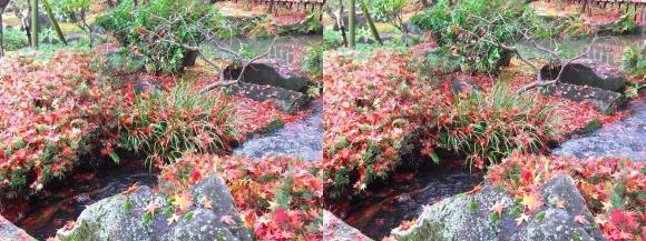 姫路城西屋敷公園 好古園 流れの平庭~夏木の庭~松の庭~花の庭⑧(交差法)