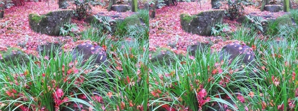 姫路城西屋敷公園 好古園 流れの平庭~夏木の庭~松の庭~花の庭⑦(平行法)