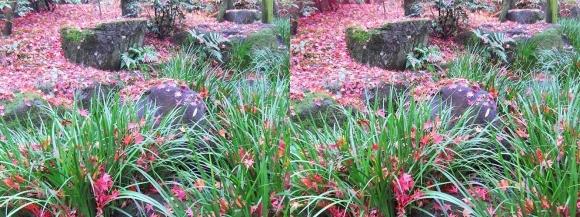 姫路城西屋敷公園 好古園 流れの平庭~夏木の庭~松の庭~花の庭⑦(交差法)