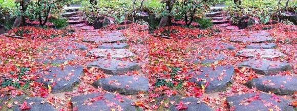 姫路城西屋敷公園 好古園 流れの平庭~夏木の庭~松の庭~花の庭⑥(交差法)