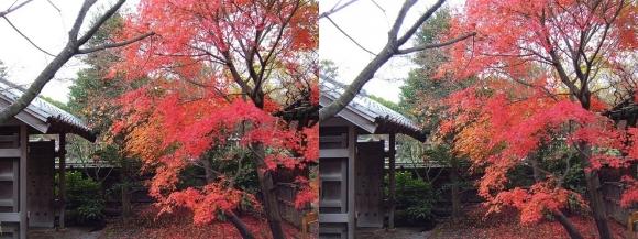 姫路城西屋敷公園 好古園 流れの平庭~夏木の庭~松の庭~花の庭⑤(平行法)