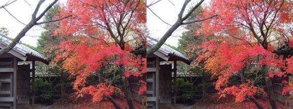 姫路城西屋敷公園 好古園 流れの平庭~夏木の庭~松の庭~花の庭⑤(交差法)