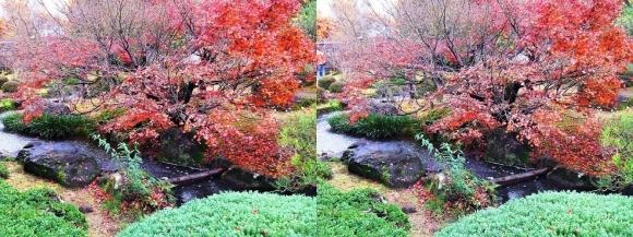 姫路城西屋敷公園 好古園 流れの平庭~夏木の庭~松の庭~花の庭②(平行法)