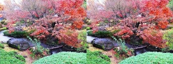 姫路城西屋敷公園 好古園 流れの平庭~夏木の庭~松の庭~花の庭②(交差法)