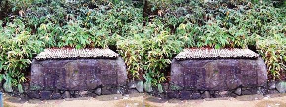 姫路城西屋敷公園 好古園 苗の庭⑥(交差法)