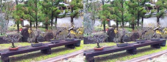 姫路城西屋敷公園 好古園 苗の庭④(平行法)