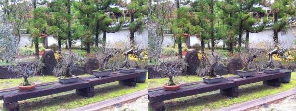 姫路城西屋敷公園 好古園 苗の庭④(交差法)
