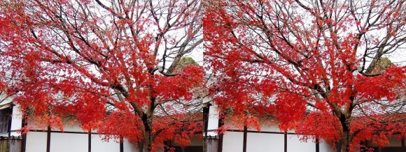 姫路城西屋敷公園 好古園 苗の庭②(交差法)
