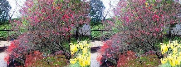 姫路城西屋敷公園 好古園 御屋敷の庭⑬(平行法)