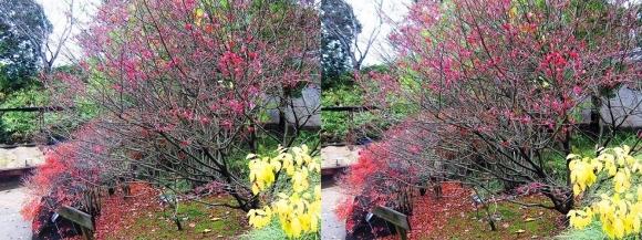姫路城西屋敷公園 好古園 御屋敷の庭⑬(交差法)