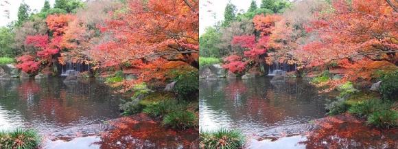 姫路城西屋敷公園 好古園 御屋敷の庭⑧(平行法)