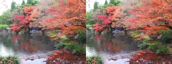 姫路城西屋敷公園 好古園 御屋敷の庭⑧(交差法)