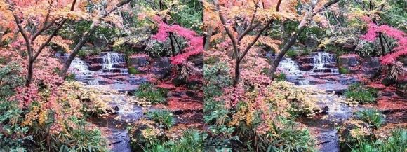 姫路城西屋敷公園 好古園 御屋敷の庭⑥(平行法)