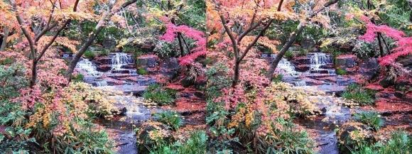 姫路城西屋敷公園 好古園 御屋敷の庭⑥(交差法)