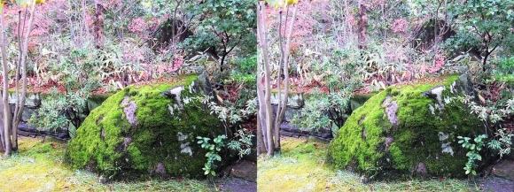 姫路城西屋敷公園 好古園 御屋敷の庭⑤(平行法)