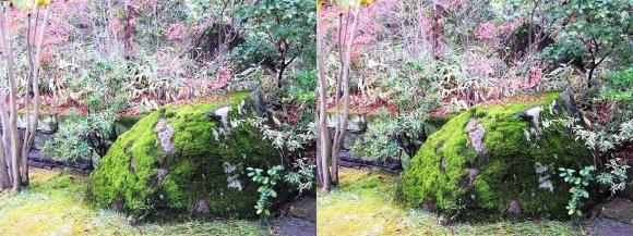 姫路城西屋敷公園 好古園 御屋敷の庭⑤(交差法)