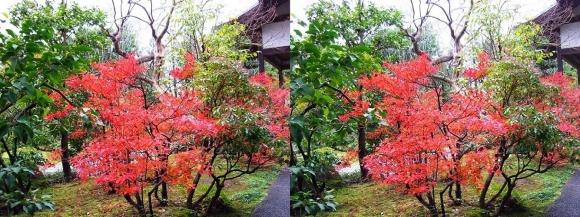姫路城西屋敷公園 好古園 御屋敷の庭④(平行法)