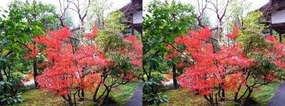 姫路城西屋敷公園 好古園 御屋敷の庭④(交差法)