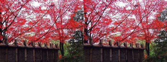 姫路城西屋敷公園 好古園 御屋敷の庭③(平行法)