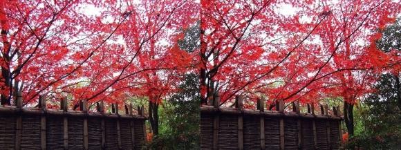 姫路城西屋敷公園 好古園 御屋敷の庭③(交差法)