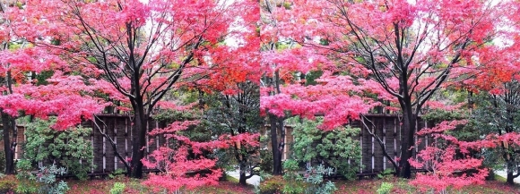 姫路城西屋敷公園 好古園 御屋敷の庭①(平行法)