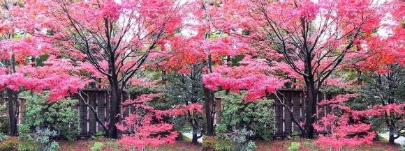 姫路城西屋敷公園 好古園 御屋敷の庭①(交差法)