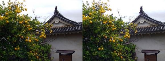 姫路城帯の櫓(平行法)