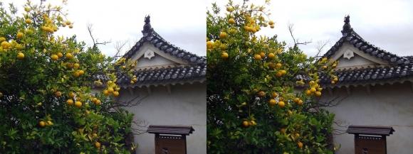 姫路城帯の櫓(交差法)