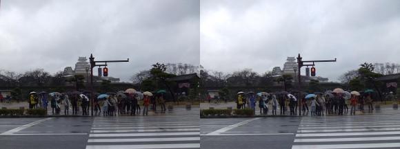 姫路城前横断歩道(平行法)