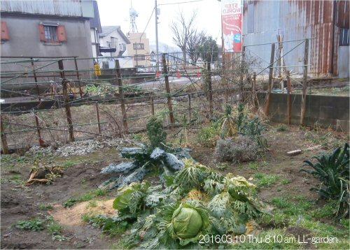 02b 500 20160310 0810 LL-garden no-snow
