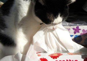 01b 300 cat Kleenex