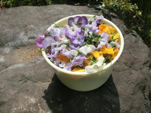 今日の花がら